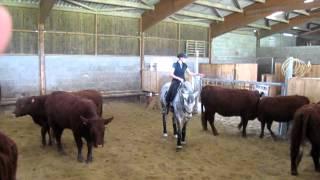 Tri de bétail   1ere journée   oct 2012 036