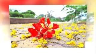 Sắc hoa màu nhớ - Nguyễn Văn Đông - Hiền Dương