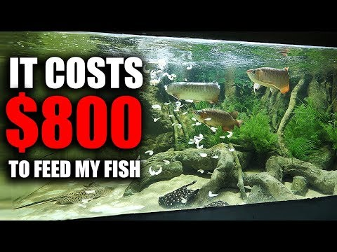 WHAT MY FISH EAT IN A DAY