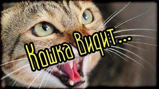 Кошка видит... (Страшная История)