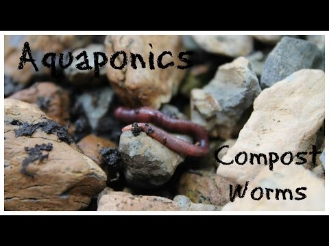 Suburban Aquaponics - Using Compost Worms To Break Down Solid Waste
