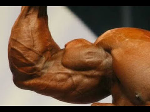 The Top 5 Biggest Biceps In Bodybuilding History - YouTube
