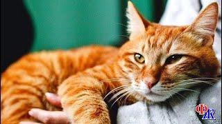Бездомный Мурзик спас злого жильца от разорения и обрёл своё кошачье счастье