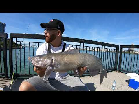 How To Catch CHANNEL CATFISH In The Detroit River- Chicken Liver