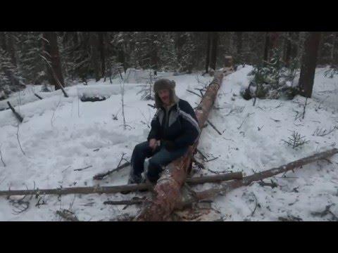 Какие деревья часто встречаются в лесах России: фото и