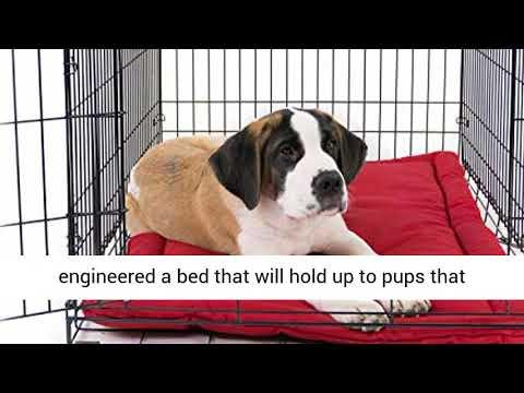 indestructible-dog-bed-k9-ballistics-tough-dog-create-pad---washable-and-waterproof