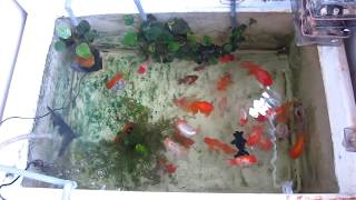 Ha Noi - Viet Nam : Goldfish Kingdom