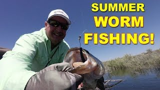Summer Worm Fishing Tips for Bass Fishing (These Work!) | Bass Fishing