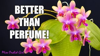 Orchids with strong fragrance - Who needs perfume freshener?
