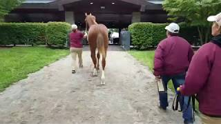 Follow an American Pharoah Yearling Through the Keeneland Sale