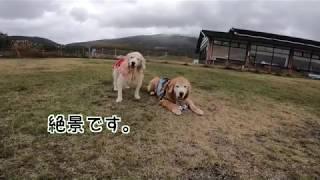 老犬と北軽井沢へ