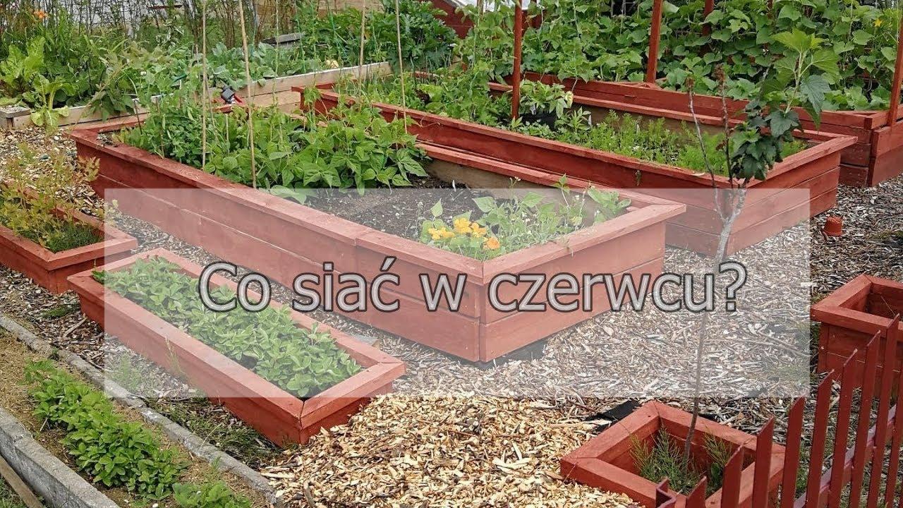 Co Siac W Czerwcu Ogrod Warzywny W Skrzyniach Ogrod Warzywny Permakultura Ogrod Warzywny Plan Youtube