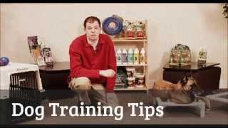 Dog Training Tips ☻ How To Train A Dog, Dog Training Tips And Technique