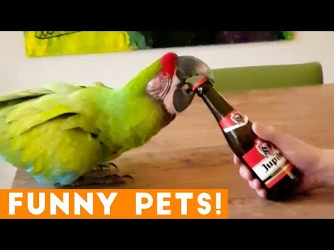 Funniest Pets of the Week Compilation April 2018 | Funny Pet Videos