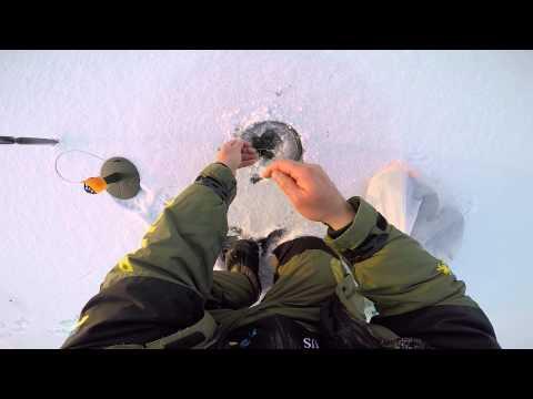 Cмотреть видео Поклевка щуки на зимнюю жерлицу