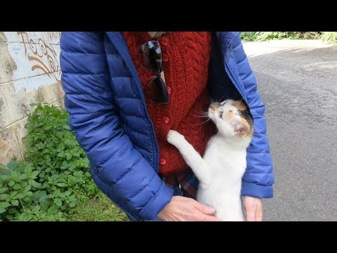 Calico cat with painted nose climbing on me