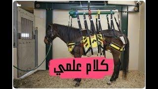 لماذا يقتل الحصان اذا كسر ساقة وقطع ذيله !!