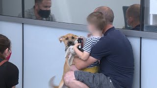 Stolen dog reunited with Malden family after being apart for weeks