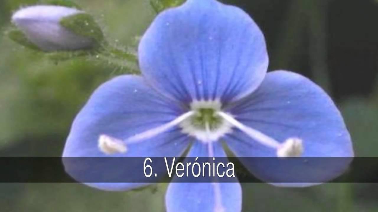 Las Mejores Curiosidades Flores Con Nombre De Mujer Y Su