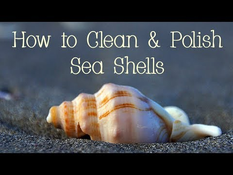 How to Clean and Polish Sea Shells