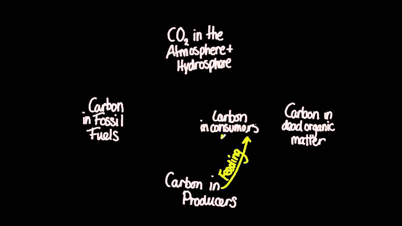 5 2 1 Draw And Label A Diagram Of The Carbon Cycle