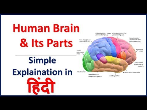 Human Brain & Its Parts Simple Explaination In Hindi | Bhushan Science
