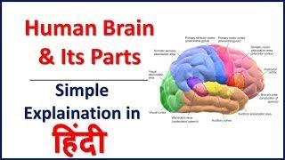 Video Human Brain & Its Parts Simple explaination in Hindi | Bhushan Science download MP3, 3GP, MP4, WEBM, AVI, FLV Juni 2018