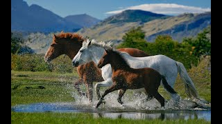 How to have a career revolving around horses?
