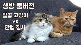 애정 넘치는 따뜻한 고양이 방송 (4/22) thumbnail