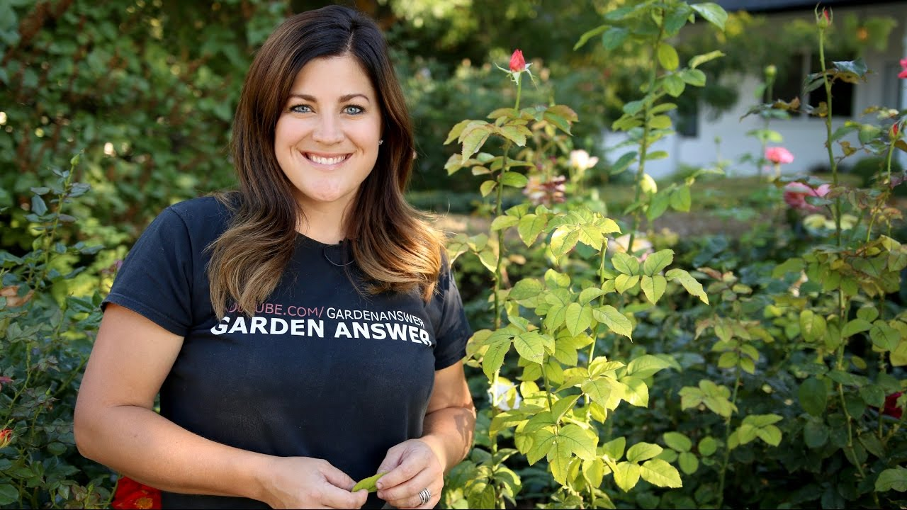 Meet Laura Leboutillier Of Garden Answer Gardener S Supply
