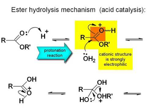 making soap base catalyzed hydrolysis of a The hydrolysis of esters is catalyzed by either an acid or a base acidic hydrolysis is simply the reverse of esterification alkaline hydrolysis of esters is called saponification (latin sapon, meaning soap, and facere, meaning to make) in a saponification reaction.