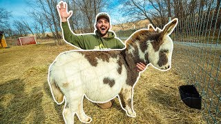 I Bought MINI DONKEYS for My BACKYARD FARM!!!