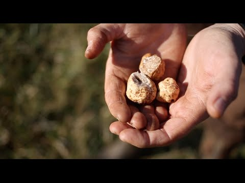 Things You Didnt Know About Oregon Truffles