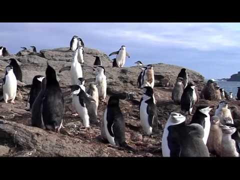 VP8ORK South Orkney Islands DXpedition