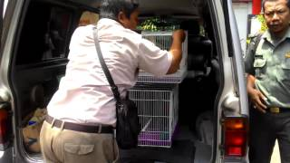 Pengagalan Penyelundupan Burung Dilindungi