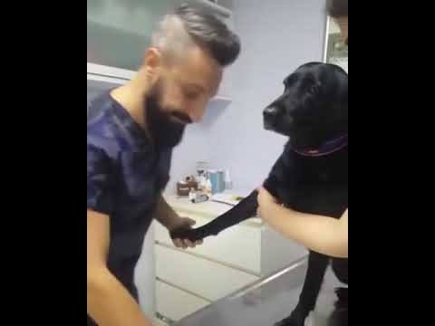 Dog Stays Calm While Getting a Shot at the Vet.