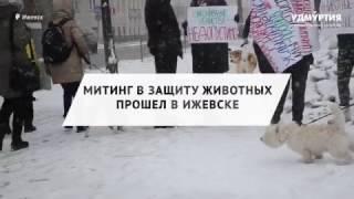 Около 40 человек приняли в Ижевске участие в митинге в защиту животных