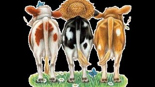 Le cancan des vaches normandes