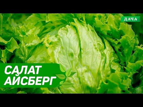 Салат айсберг 🌱Как Вырастить салат айсберг из семян 🍃Лайфхаки для хорошего урожая👌 | начинающих | условиях | новичков | лайфхаки | домашних | лайфхак | растет | огород | дача | сад