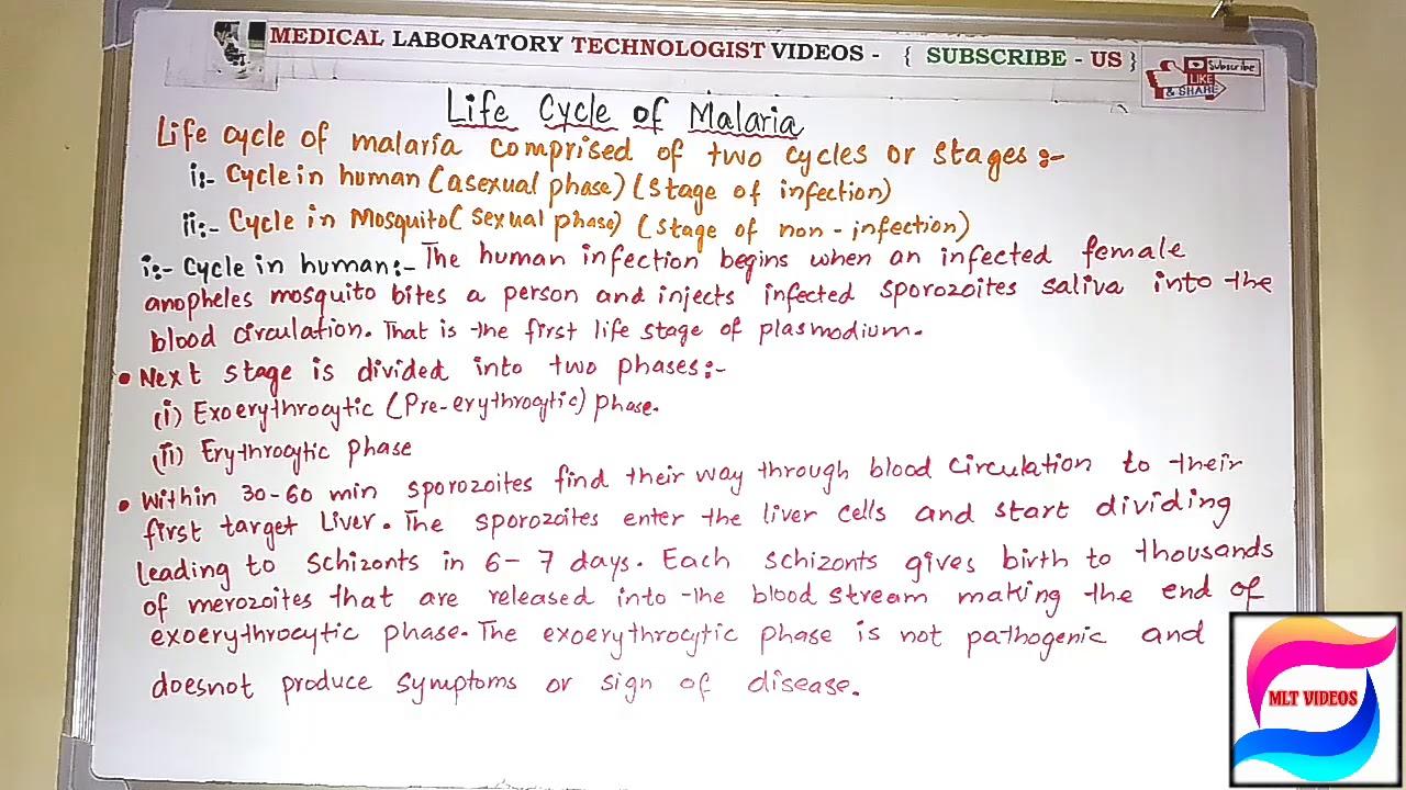 a malária plazmodium morfológiája röviden)