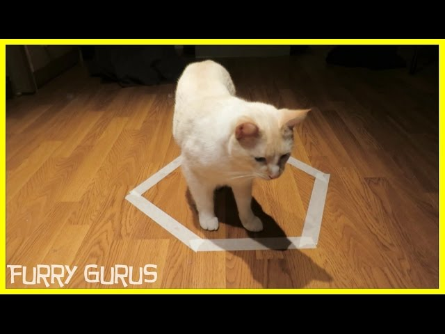 ESCAPE FROM CAT CIRCLE TRAP!ESCAPE FROM CAT CIRCLE TRAP!