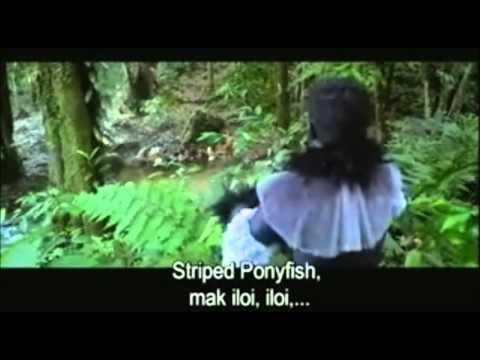 Ikan kekek Versi Pontianak Vs Orang Minyak