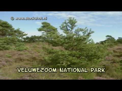 Veluwe National Park