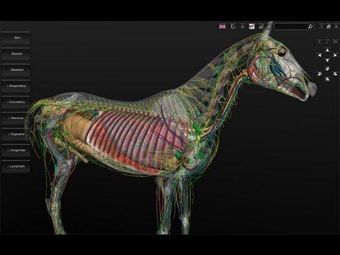 3d Horse Anatomy Software V11 Youtube