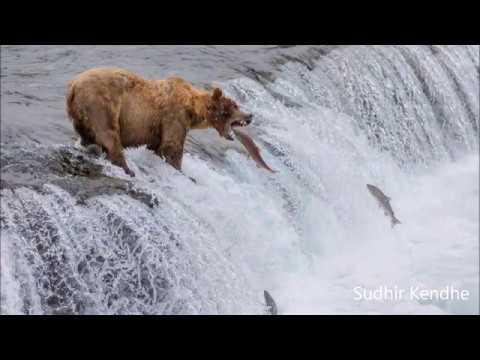 Editor's Choice - DCP Wildlife Photography Annual Awards 2017