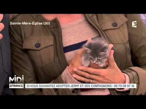 ANIMAUX : L'adoption De 4 Adorables Chatons
