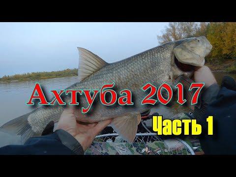 Ахтуба 2017 (Жерех, щука)