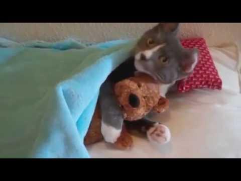 Видео, клипы, ролики смотреть онлайн «Коты И Кошки»
