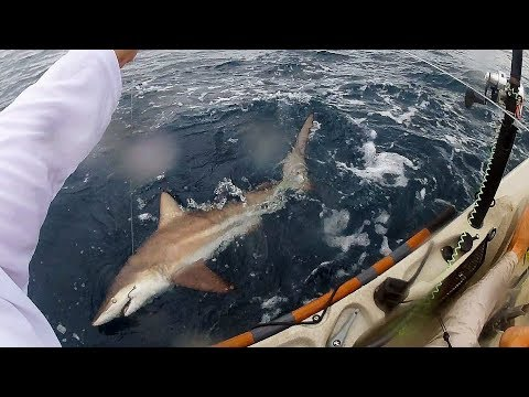 Kayak Fishing: SHARKS EVERYWHERE, Tuna & Roosterfish | Field Trips Panama