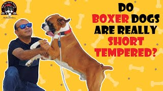 Do Boxer Dogs are really short tempered? | New Video 2020 | Baadal Bhandaari